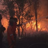 Kebakaran Hutan Terjadi Di Ogan Ilir