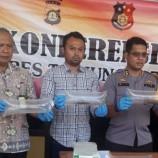 Polisi Amankan Ratusan Ribu Benih Lobster yang Hendak Diselundupkan ke Singapura